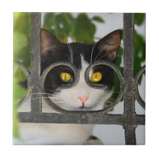 Curious Cat with Spectacles Frame Funny  - Ceramic Ceramic Tile