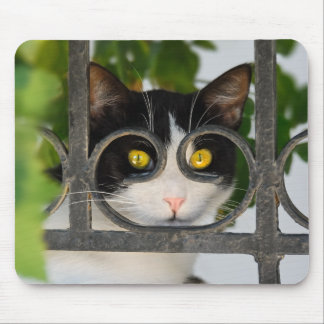 Curious Cat with Spectacles Frame Funny - Supply Mouse Pad