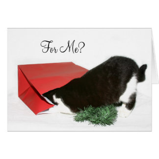 Curious Christmas cat Greeting Card