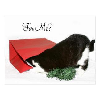 Curious Christmas cat Postcard
