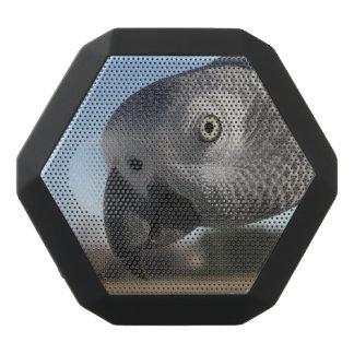 Curious Congo African Grey Parrot Black Boombot Rex Bluetooth Speaker