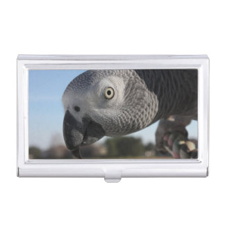 Curious Congo African Grey Parrot Business Card Holders