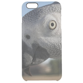 Curious Congo African Grey Parrot Clear iPhone 6 Plus Case