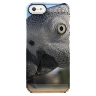 Curious Congo African Grey Parrot Clear iPhone SE/5/5s Case