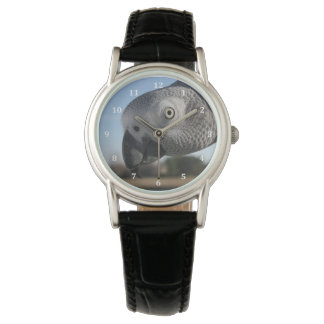 Curious Congo African Grey Parrot Watches