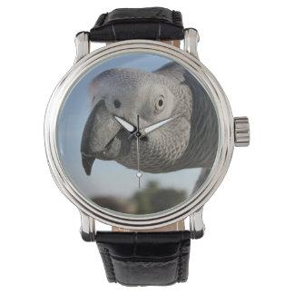 Curious Congo African Grey Parrot Wristwatch