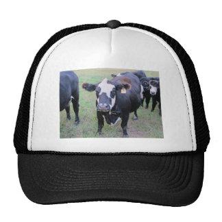 Curious Cow Cap