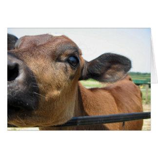 Curious Cow Card