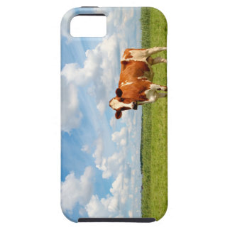 Curious cow standing on meadow iPhone 5/5S cover