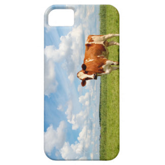 Curious cow standing on meadow. cover for iPhone 5/5S