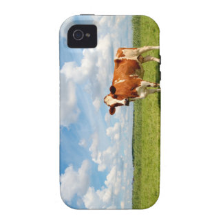 Curious cow standing on meadow iPhone 4 covers