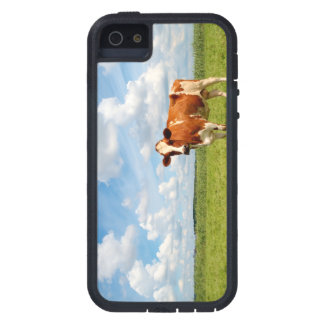 Curious cow standing on meadow iPhone 5/5S covers