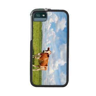 Curious cow standing on meadow. case for iPhone 5