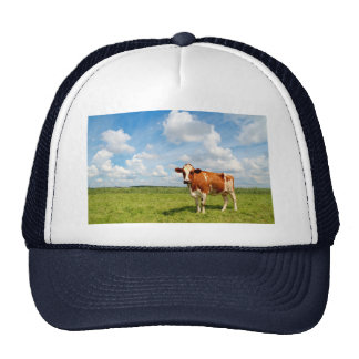 Curious cow standing on meadow hats