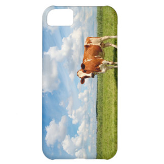 Curious cow standing on meadow. iPhone 5C cases
