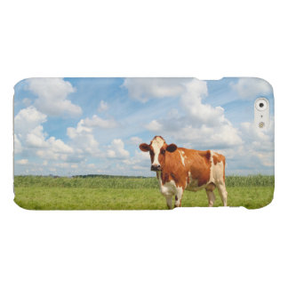 Curious cow standing on meadow. glossy iPhone 6 case