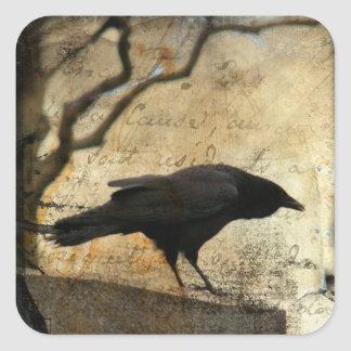 Curious Crow Square Sticker
