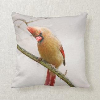 Curious Female Cardinal Throw Pillow