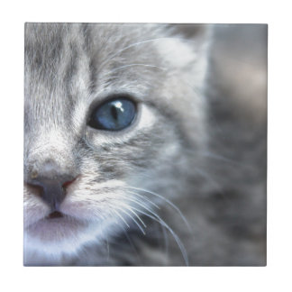 Curious Grey Kitten Small Square Tile