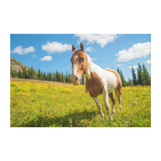 Curious horse in an alpine meadow in summer gallery wrap canvas