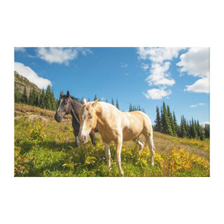 Curious horses foraging on grass canvas print