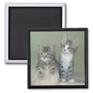 Curious kittens magnet