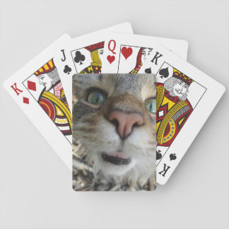 Curious Kitty Cat - card deck
