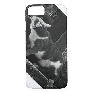 Curious Kitty iPhone 8/7 Case