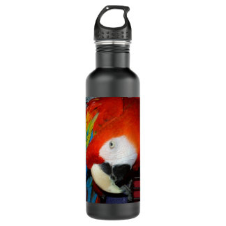 Curious Macaw 710 Ml Water Bottle