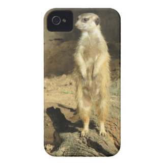 Curious Meerkat iPhone 4 Covers