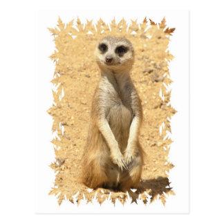 Curious Meerkat Postcard