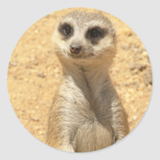 Curious Meerkat Sticker