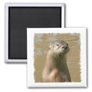 Curious Otter Square Magnet