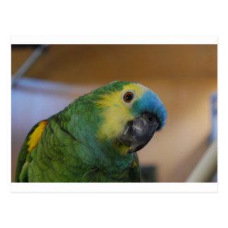 Curious Parrot Postcard