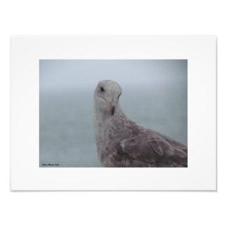 Curious Pigeon Print