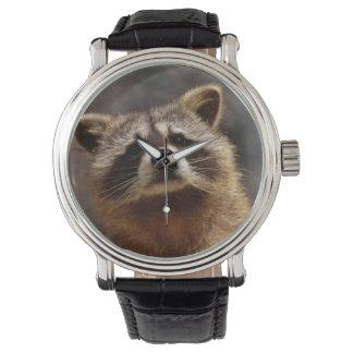 Curious Raccoon Watch