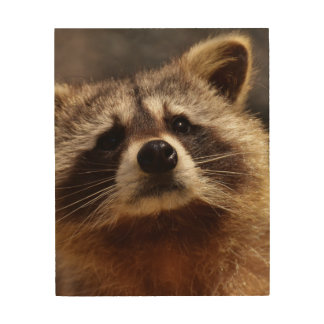 Curious Raccoon Wood Wall Art