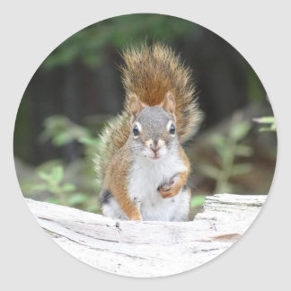 Curious Red Squirrel Round Sticker