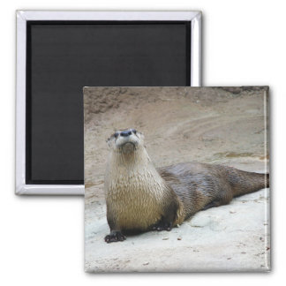 Curious River Otter Magnet