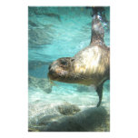 Curious sea lion Galapagos underwater Stationery Design