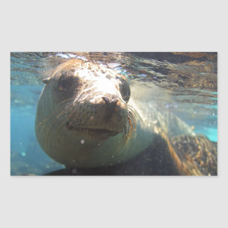 Curious sea lion underwater Galapagos Islands Rectangular Sticker