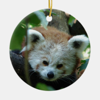 Curious Senior Red Panda Round Ceramic Decoration