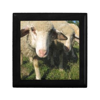 Curious sheep gift box