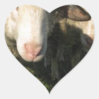 Curious sheep heart sticker