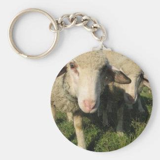 Curious sheep key ring