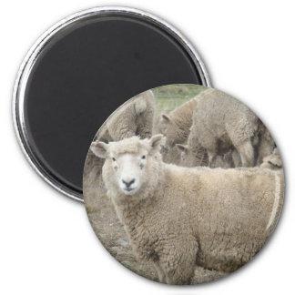 Curious Sheep Refrigerator Magnets