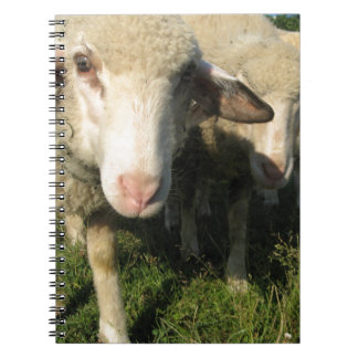 Curious sheep notebooks