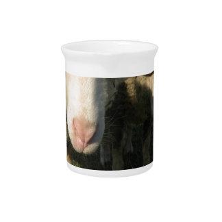 Curious sheep pitcher