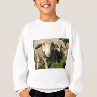 Curious sheep sweatshirt
