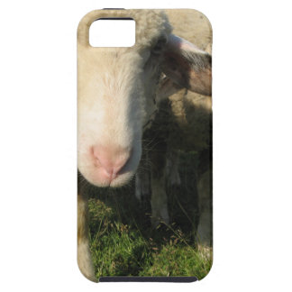 Curious sheep tough iPhone 5 case